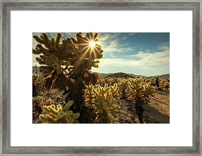 Cholla Garden Framed Print by Jackie Novak