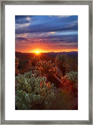 Cholla Sunset  Framed Print