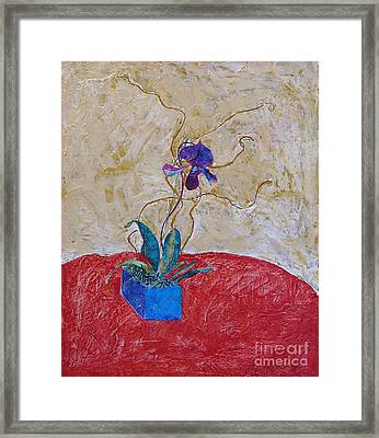 Christmas Orchid Framed Print by James SheppardIII