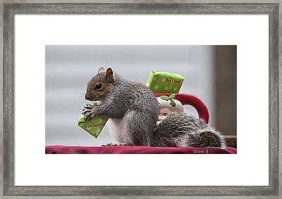 Christmas Squirrel Framed Print