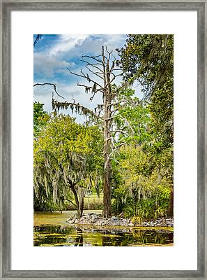 City Park Lagoon Framed Print by Steve Harrington