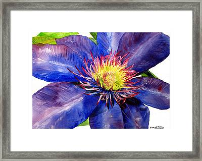Clematis Framed Print by Tina Storey