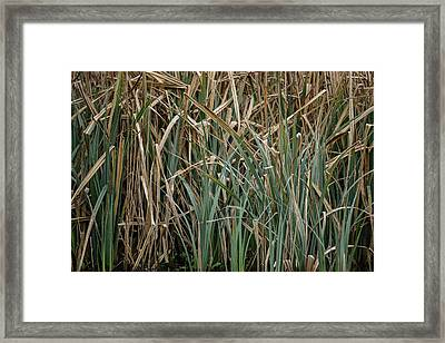 Close Up Image Of Reeds In Water During Spring Framed Print