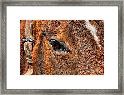 Close Up Of A Horse Eye Framed Print by Paul Ward