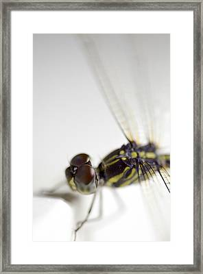 Close Up Shoot Of A Anisoptera Dragonfly Framed Print