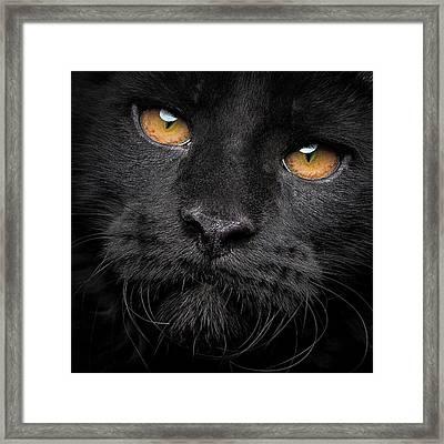 Framed Print featuring the photograph Closer by Robert Sijka