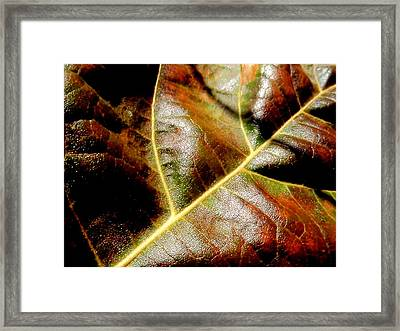 Closeup Framed Print by Beth Akerman