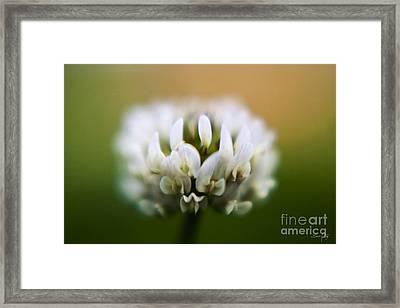 Clover Framed Print by Scott Pellegrin
