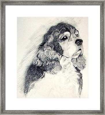 Cocker Spaniel Framed Print by Susan A Becker