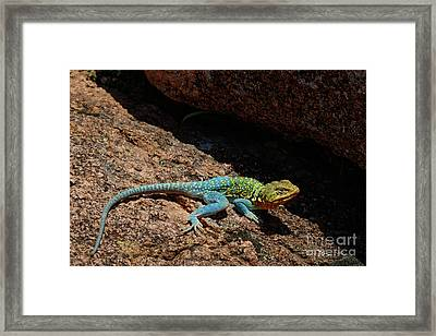 Colorful Lizard II Framed Print