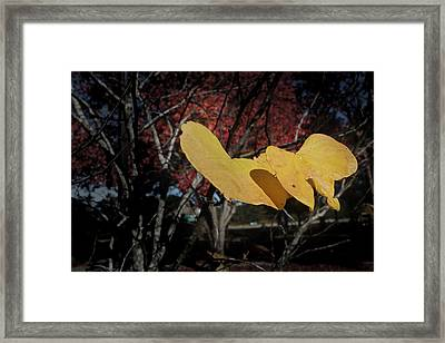 Framed Print featuring the photograph Colors Of Fall by Joseph G Holland