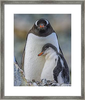 Comfort Framed Print by Tony Beck