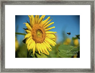 Coming In For A Landing Framed Print
