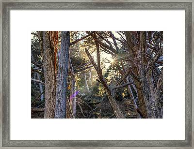 Coming Through Framed Print by Joseph S Giacalone