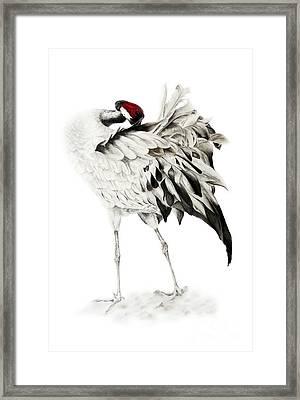 Common Crane Framed Print by Marie Burke