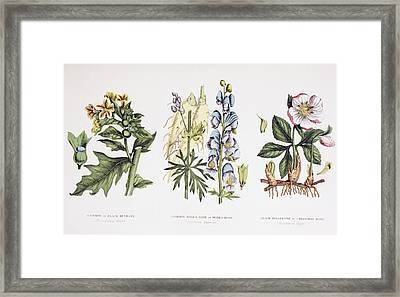 Common Poisonous Plants. Left To Right Framed Print