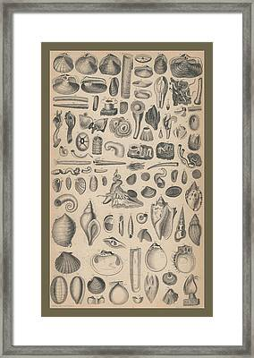 Conchology Framed Print by Rob Dreyer