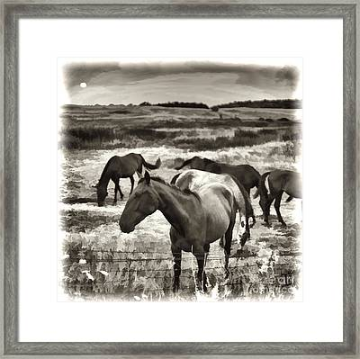 Contentment Framed Print by Gordon Wood