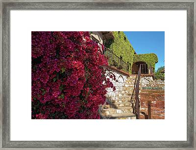 Contrasts Framed Print by Stephen Campbell