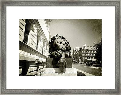 Corcoran Lion Framed Print