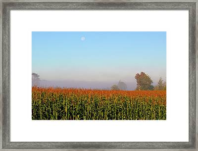 Cornfield Moonset Framed Print