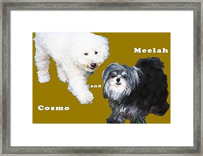 Cosmo And Meelah 1 Framed Print by Terry Wallace
