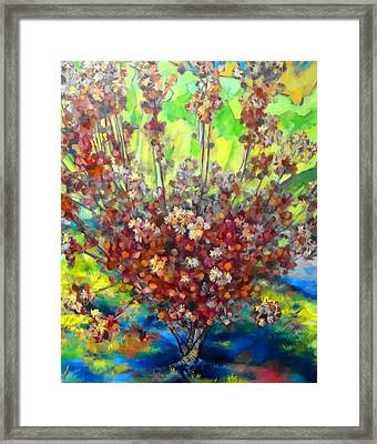 Cotinus Coggygria Framed Print