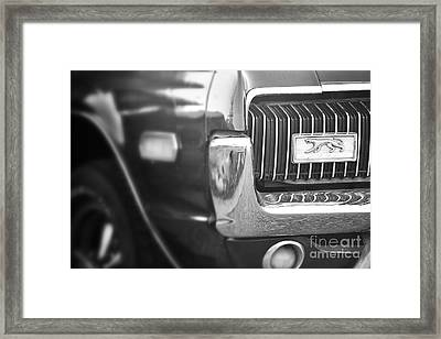 Cougar Time Framed Print