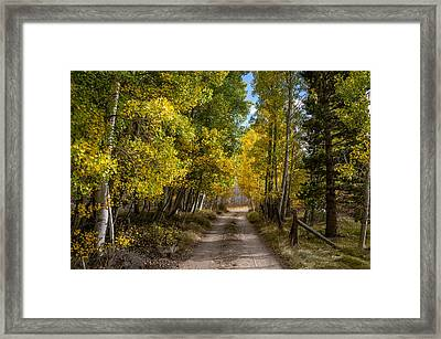 Country Road Framed Print by Cat Connor