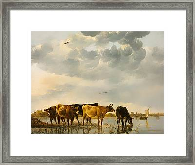 Cows In A River Framed Print