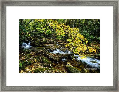 Cranberry Wilderness Autumn Framed Print by Thomas R Fletcher