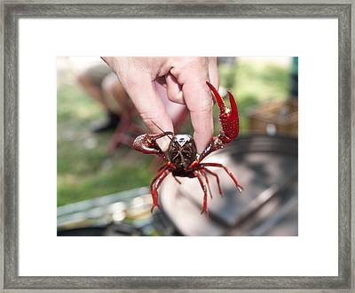 Crawfish Framed Print