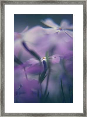 Creeping Phlox Framed Print