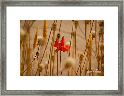Cretan Flower  Framed Print by David Warrington