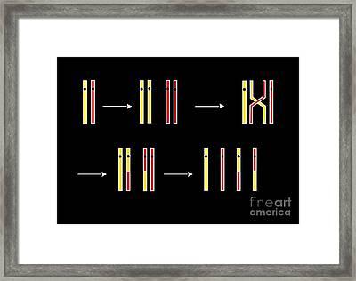 Crossing Over, Artwork Framed Print