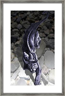 Crouching Panther Framed Print by James Robinson