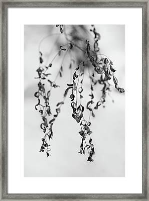 Crowded Framed Print by Gabriela Insuratelu