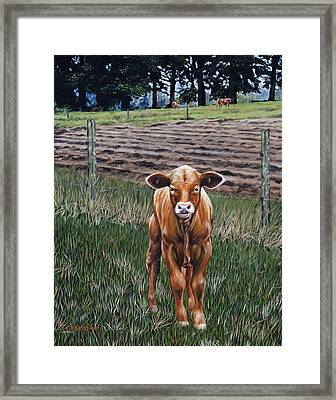 Framed Print featuring the painting Curious Calf by Rick McKinney
