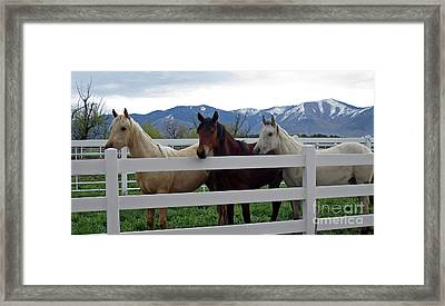Framed Print featuring the photograph Curious Yearlings by Juls Adams