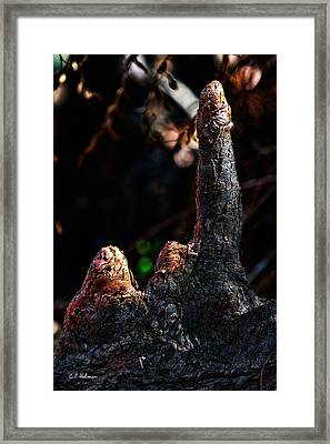Cypress Knees Framed Print by Christopher Holmes