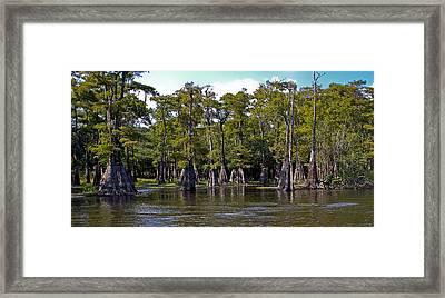 Cypress On The Suwannee Framed Print