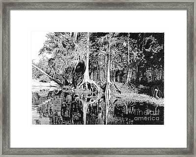 cypress Roots I Framed Print