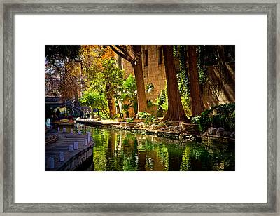 Cypress Trees In The Riverwalk Framed Print by Iris Greenwell