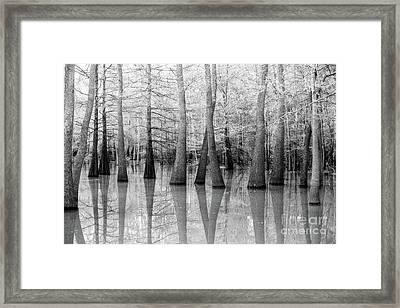 Cypress - Tupelo Swamp North Louisiana Bw Framed Print