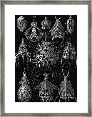 Cyrtoidea Framed Print