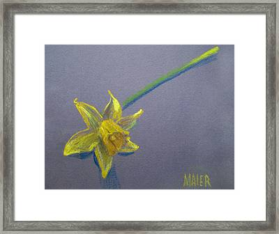 Daffodil Framed Print by Donald Maier