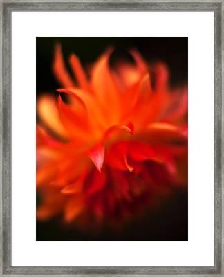 Dahlia Flame Framed Print by Mike Reid