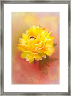 Dahlia Framed Print by Mary Timman