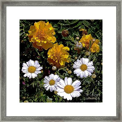 Daisies And Marigolds Framed Print