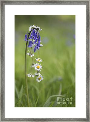 Daisy Chain Framed Print by Tim Gainey